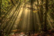 Svět usínání přírody