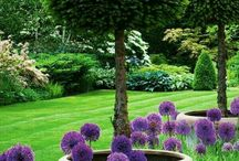 Idée jardin vert