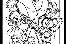 Kuş lar ve çizimleri ufuk  aykan
