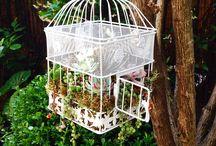 #piante e fiori / Garden giardinaggio verde piante
