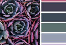 renk kombinasyon