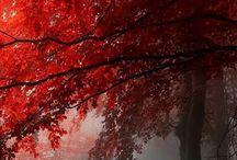 Crimson/Scarlet