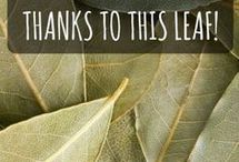 Bay Leaf For Pain