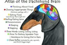 dachshunds  / by Bree Getter-DeLauro