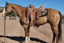 western/ranch horse