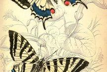 butterflies,papillon,dragonflies,grasshopers