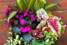 shade planters