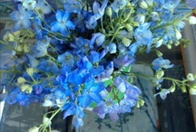 Blue / Delphiniums in a green jug