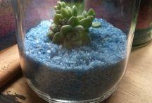 Terrarium / Plants in the jar