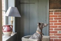 Dogs at home / beautiful dogs in beautiful interiors