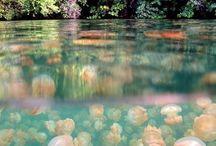 Travel - Palau, Oceania