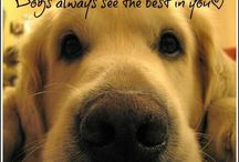 Dog queries / Things to do with dogs that are nice and cute
