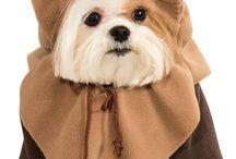 Halloween Costumes / Dog