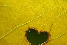 καρδιες με φυλλα