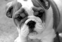 Bulldogs <3