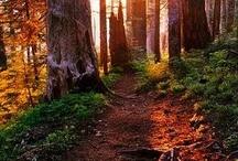 Trail running / Disfrutamos corriendo por la montaña. Sentimos la libertad de correr por los senderos