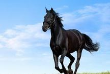 I Love Horses / by Alanna Kellogg