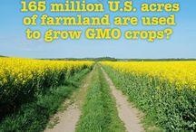 GMO Health Hazards/Information / by Michelle Delatorre