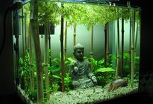 aquariums & terrariums etc