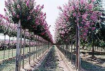 Warwick Plants