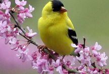 bird obsession