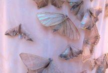 Buterflies (accesories)