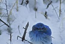 Bird Bliss