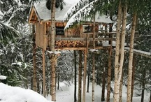 Treehouse  / by Mike Smith