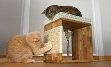 Katzenideen