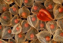 seeds - pods - semi