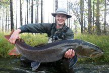 FISHING DREAM / FISHING, FLY FISHING, TAIMEN, HUCHO, MONGOLIA
