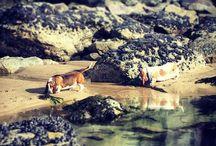 Hound love / by Amanda Helmsin