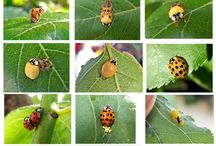 A Nature - bugs