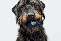 Pet Travel / A collection of helpful tips and pet travel products so you can  take your dog or cat on your next vacation!