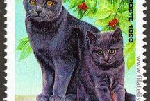 Sellos de gatitos