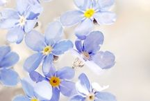 Wildflowers .