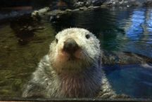 TRAVEL: ZOOS / Zoos, aquariums and etc that I have been to and want to visit.