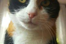 Luzie The Cat / My cat Luzie