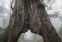 Arusha National Park / Great photos from Arusha National park wildlife, birds, nature, panoramas and activities