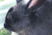 Rabbits / Articles and videos about keeping and raising rabbits.