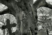 Oude kerkhoven 1