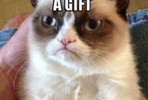 Den her kat...