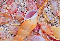 Kagylók, csigák, tengeri herkentyűk