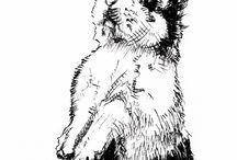 zwierzęta-królik