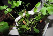 Sprout - Blyanten, der kan spire