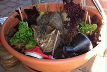 Baileys the veggie cat / Vegetarian cat
