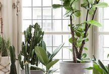 Planten binnen