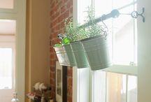 Window Plants