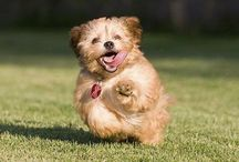 Pet training tips / Important tips on training pets
