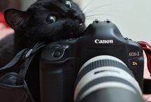 =(^_^)= Black Cats =(^_^)=